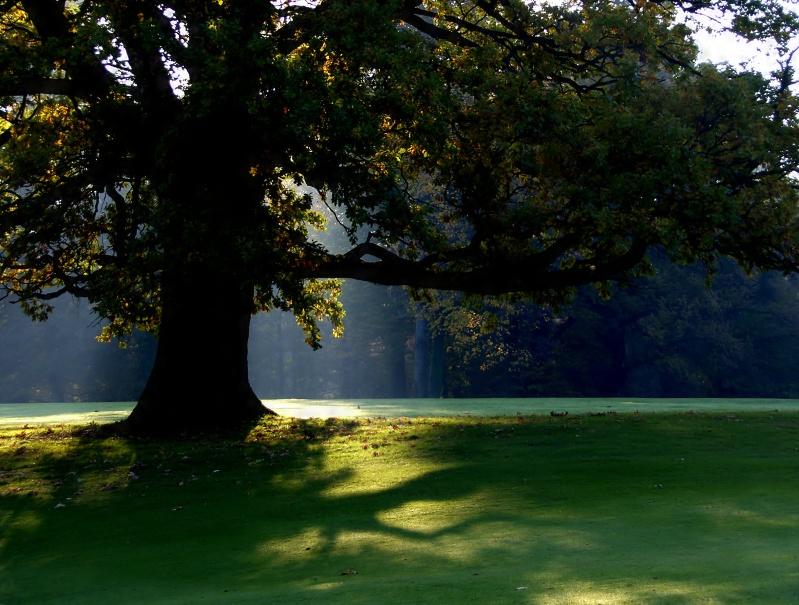 z tree sunlight